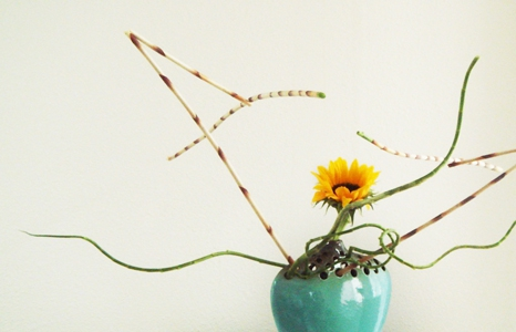 Featured_exhib_ikebana_carole_01_466x300