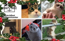 Past_exhib_film_christmas_catvidfest_2014