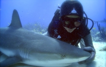 Past_exhib_film_worldoceansday2015_sharkgirl